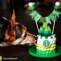 corgi-dog-cake