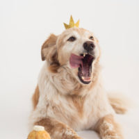 dog-cupcake