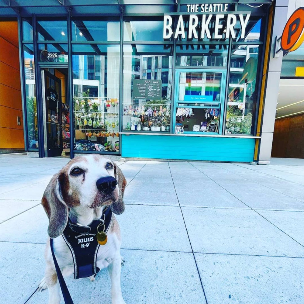 Roscoe The Beagle in front of Seattle's Dog Bakery The Seattle Barkery